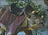 dinosaur-with-saddle